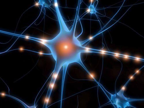 I neuroni: il deposito della memoria.